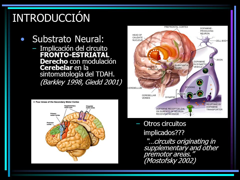 INTRODUCCIÓN Substrato Neural: