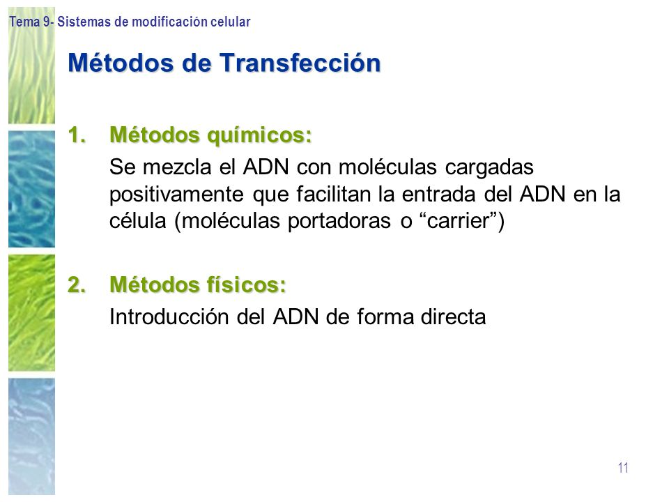 Métodos de Transfección