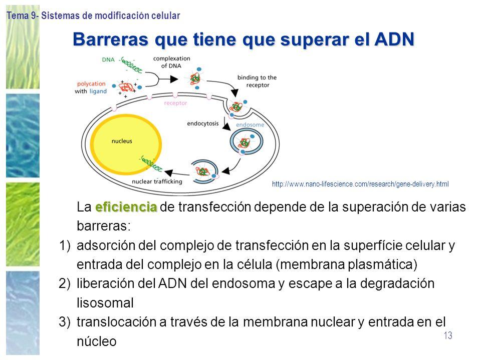 Barreras que tiene que superar el ADN
