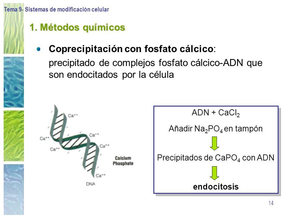 Precipitados de CaPO4 con ADN