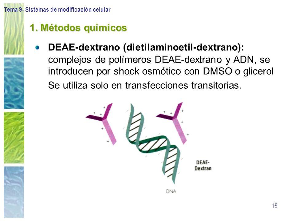 Se utiliza solo en transfecciones transitorias.