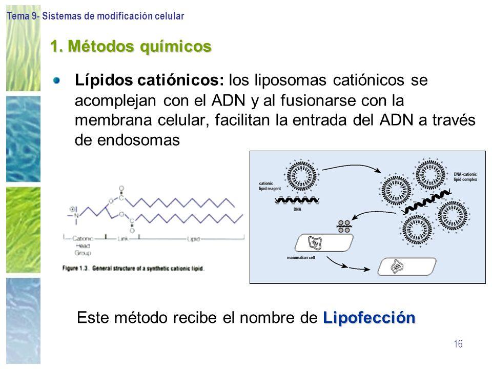 Este método recibe el nombre de Lipofección