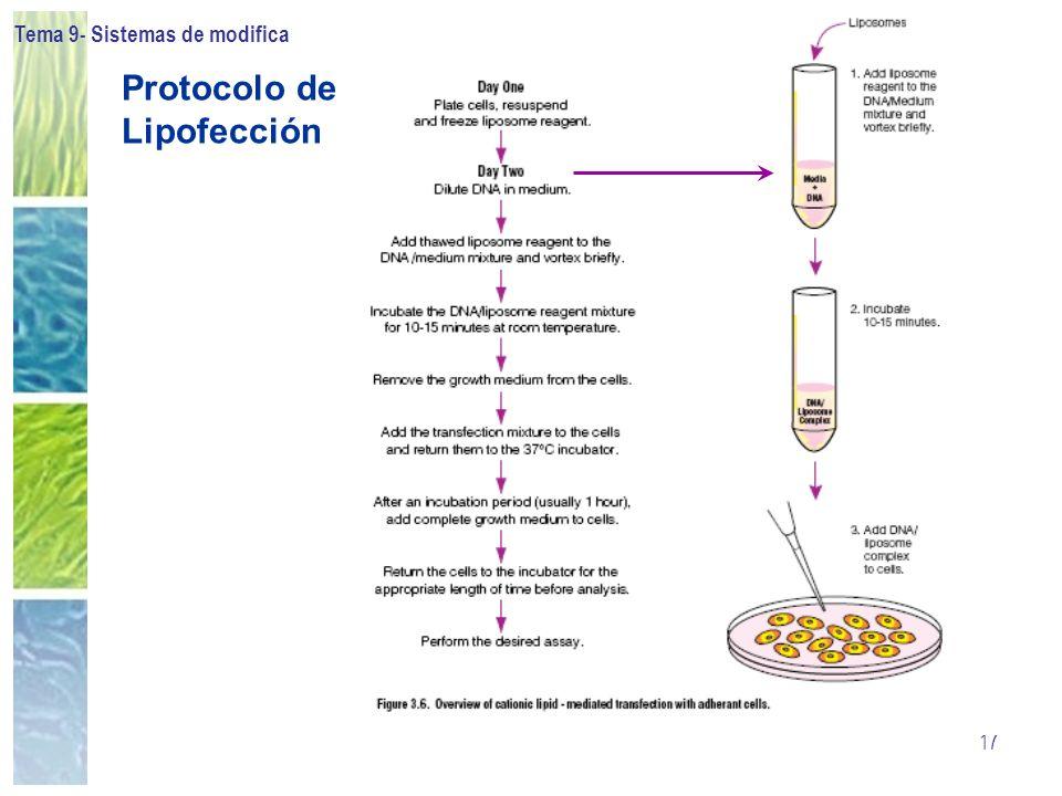 Protocolo de Lipofección
