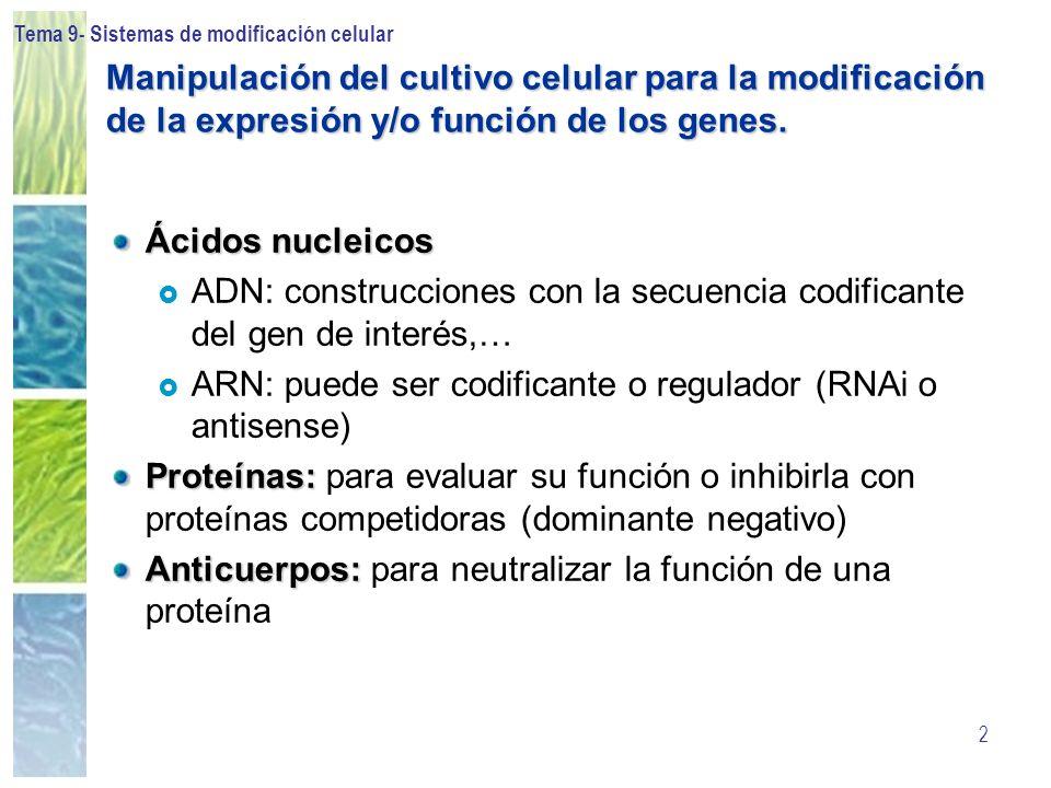ADN: construcciones con la secuencia codificante del gen de interés,…