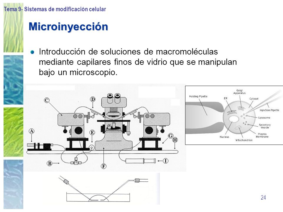 Tema 9- Sistemas de modificación celular