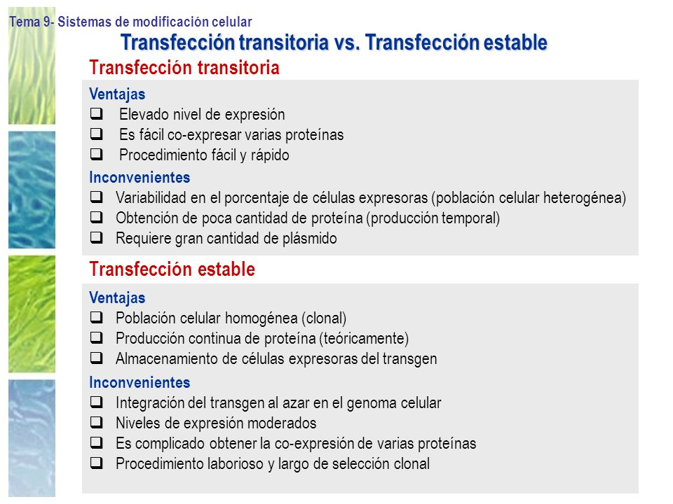 Transfección transitoria vs. Transfección estable