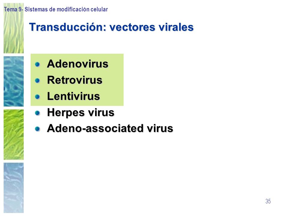 Transducción: vectores virales