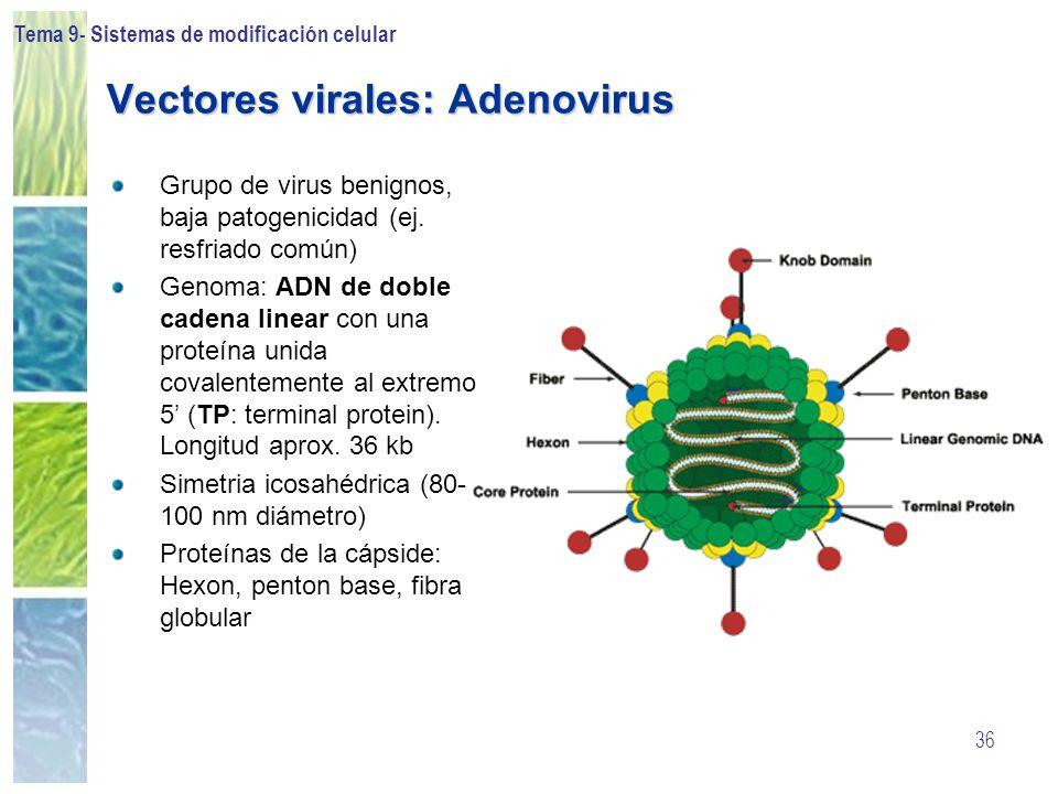 Vectores virales: Adenovirus