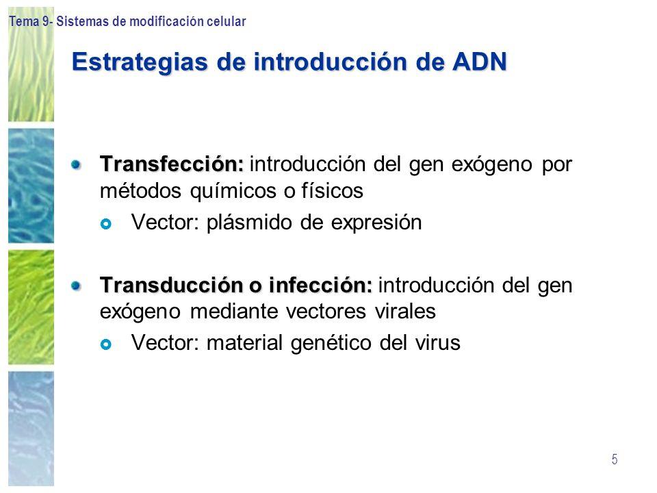 Estrategias de introducción de ADN
