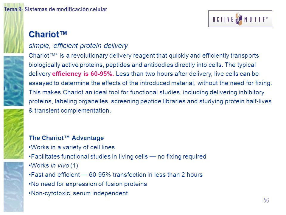 Chariot™ simple, efficient protein delivery