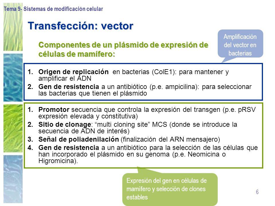 Amplificación del vector en bacterias