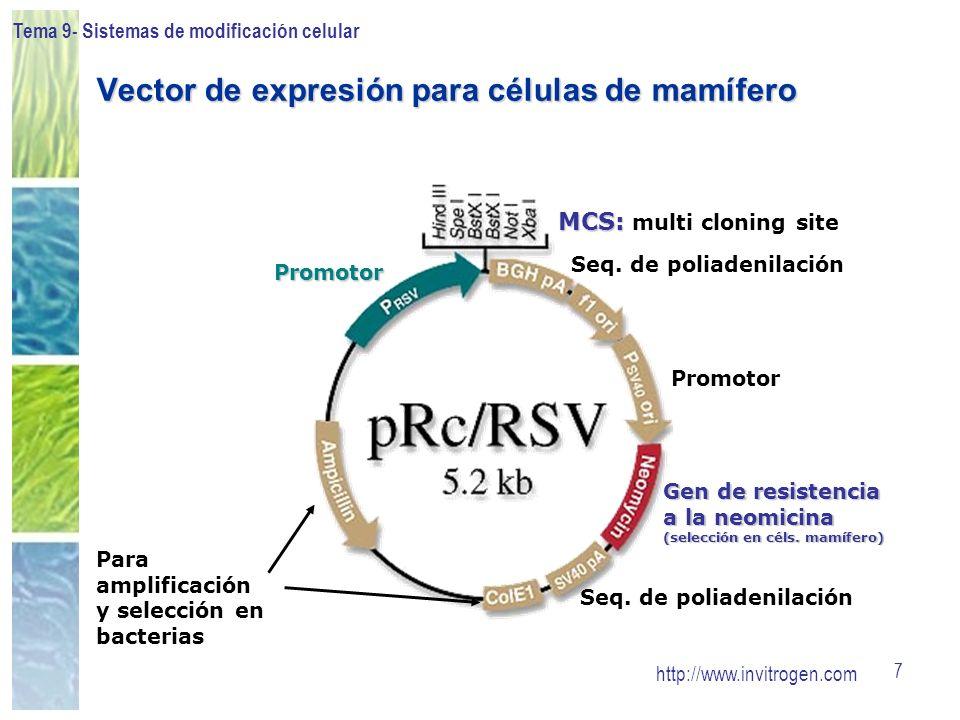 Vector de expresión para células de mamífero