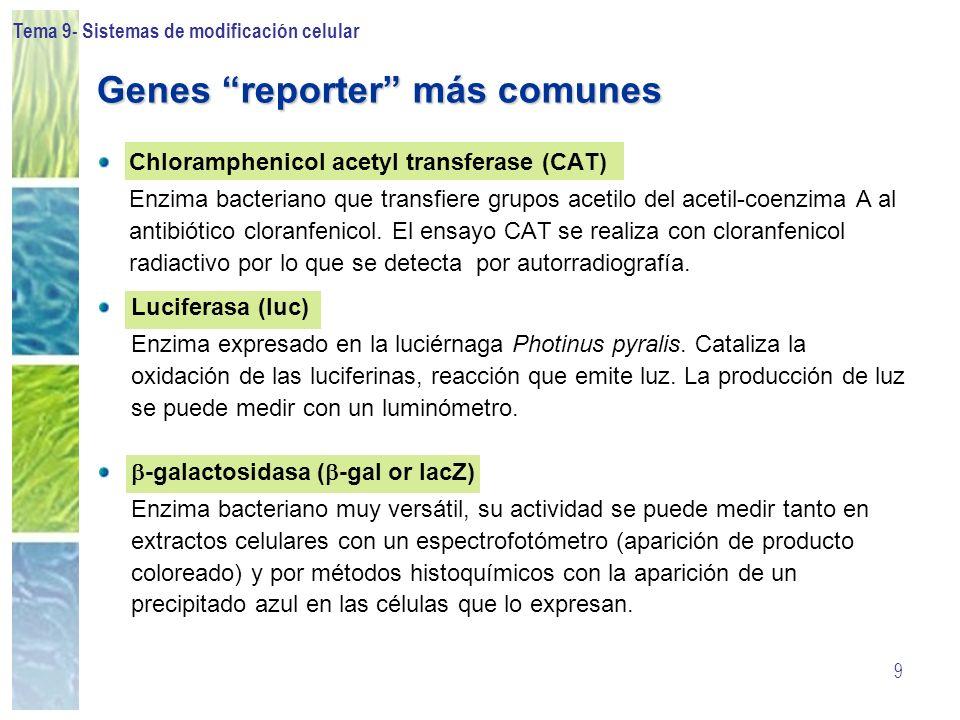 Genes reporter más comunes