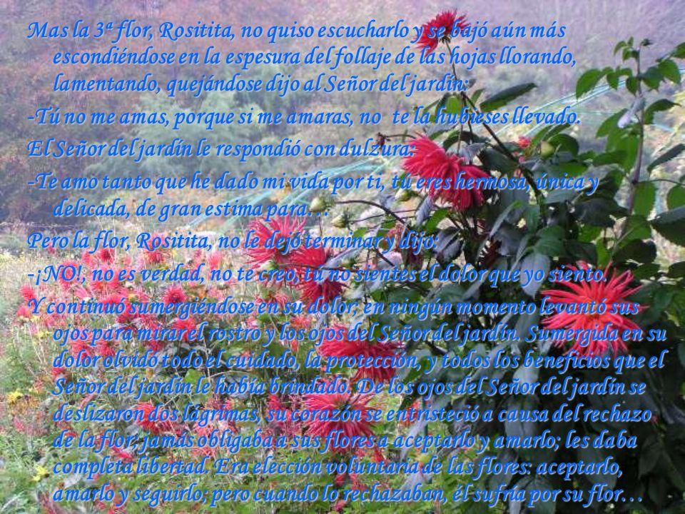 Mas la 3ª flor, Rositita, no quiso escucharlo y se bajó aún más escondiéndose en la espesura del follaje de las hojas llorando, lamentando, quejándose dijo al Señor del jardín:
