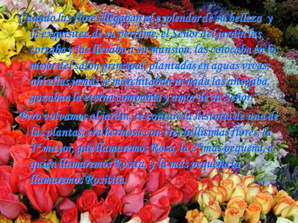 Cuando las flores llegaban al esplendor de su belleza y la exquisitez de su perfume, el Señor del jardín las cortaba y las llevaba a su mansión, las colocaba en lo mejor del salón principal, plantadas en aguas vivas; ahí ellas jamás se marchitaban ni nada las ahogaba, gozaban la eterna compañía y amor de su Señor.