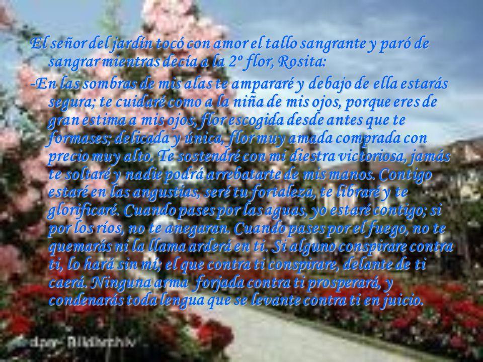 El señor del jardín tocó con amor el tallo sangrante y paró de sangrar mientras decía a la 2º flor, Rosita: