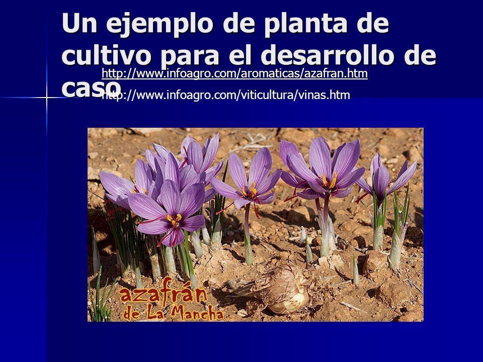 Un ejemplo de planta de cultivo para el desarrollo de caso