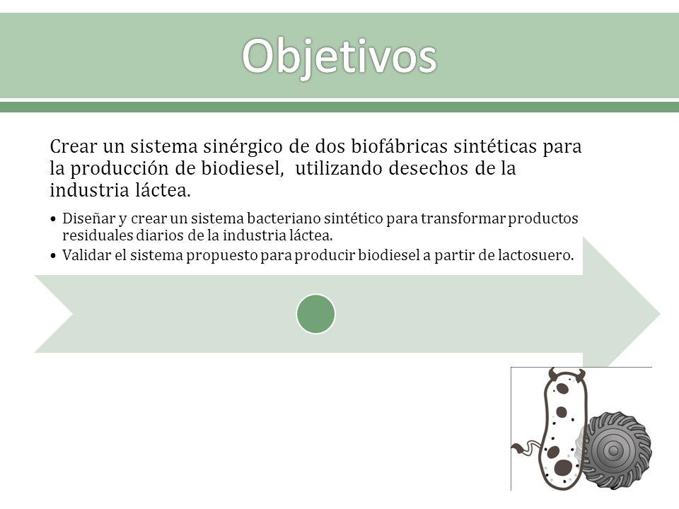 Objetivos Crear un sistema sinérgico de dos biofábricas sintéticas para la producción de biodiesel, utilizando desechos de la industria láctea.