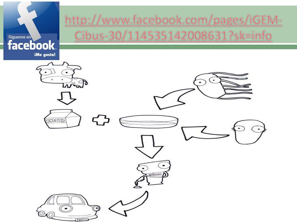 http://www.facebook.com/pages/iGEM-Cibus-30/114535142008631 sk=info