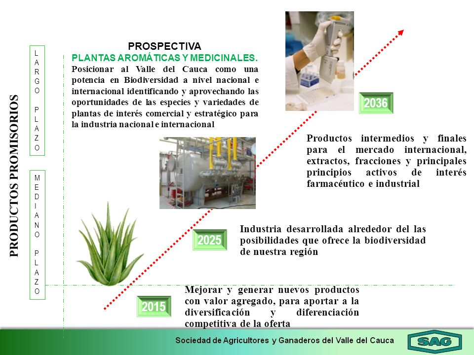 PLANTAS AROMÁTICAS Y MEDICINALES. PRODUCTOS PROMISORIOS