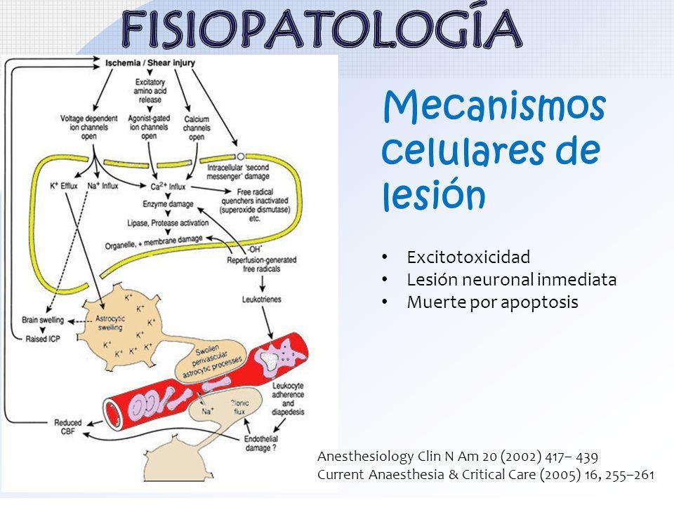 FISIOPATOLOGÍA Mecanismos celulares de lesión Excitotoxicidad