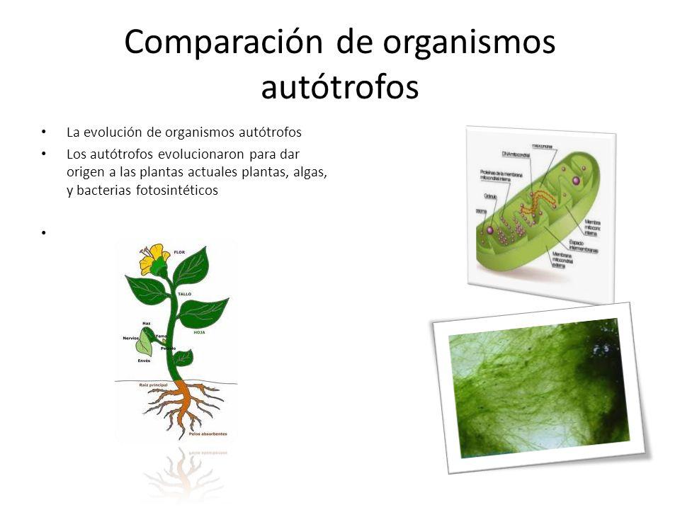 Comparación de organismos autótrofos