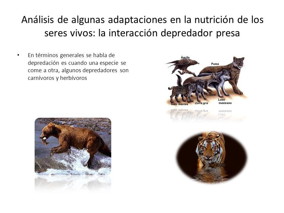 Análisis de algunas adaptaciones en la nutrición de los seres vivos: la interacción depredador presa
