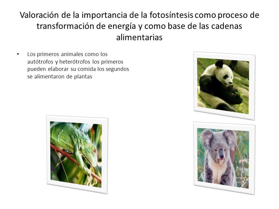 Valoración de la importancia de la fotosíntesis como proceso de transformación de energía y como base de las cadenas alimentarias