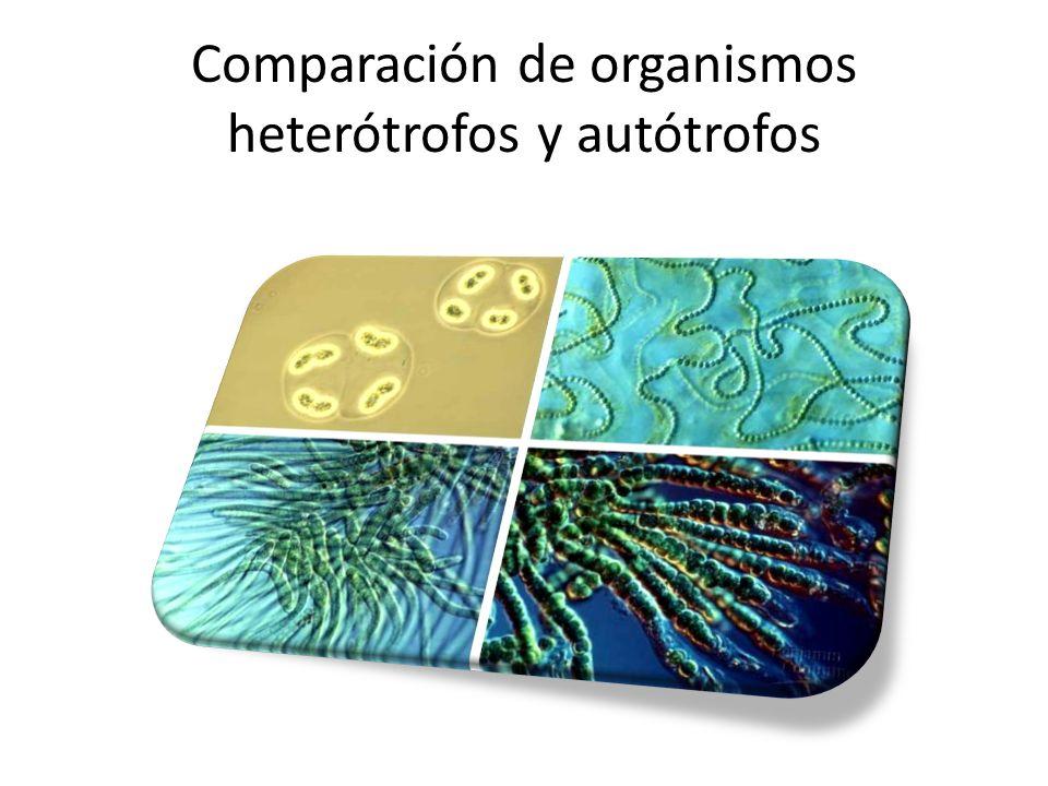 Comparación de organismos heterótrofos y autótrofos