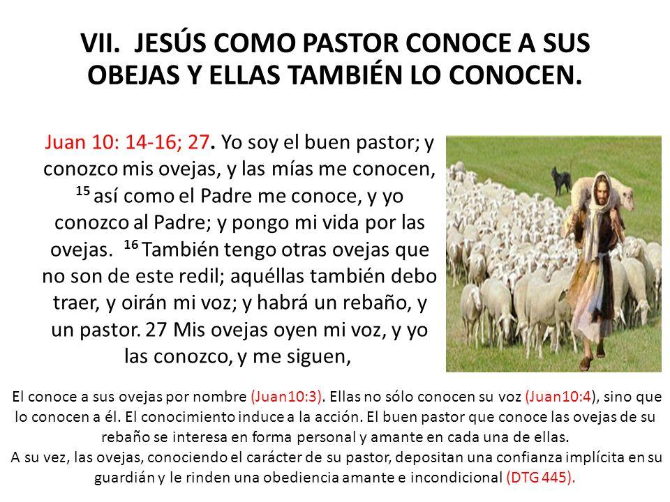 VII. JESÚS COMO PASTOR CONOCE A SUS OBEJAS Y ELLAS TAMBIÉN LO CONOCEN.