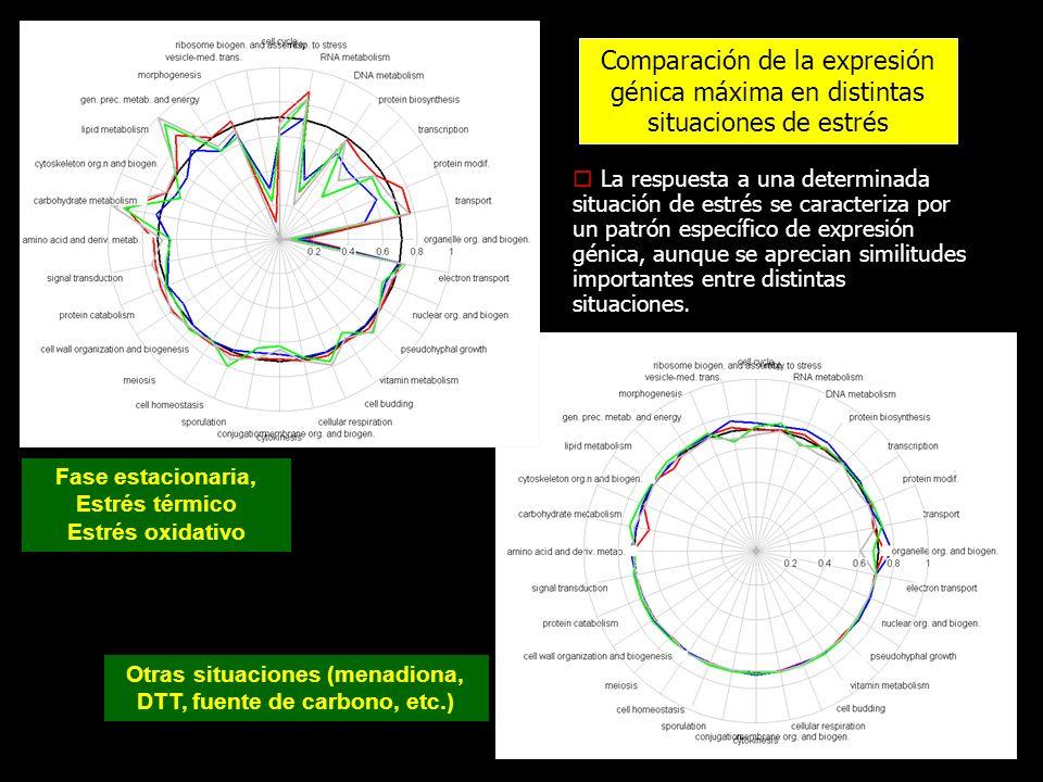 Otras situaciones (menadiona, DTT, fuente de carbono, etc.)