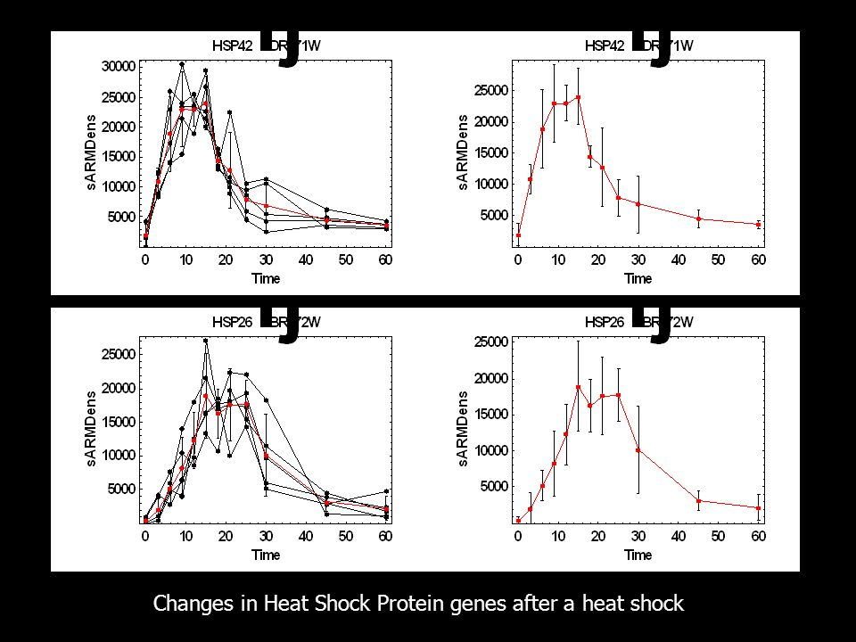 Changes in Heat Shock Protein genes after a heat shock