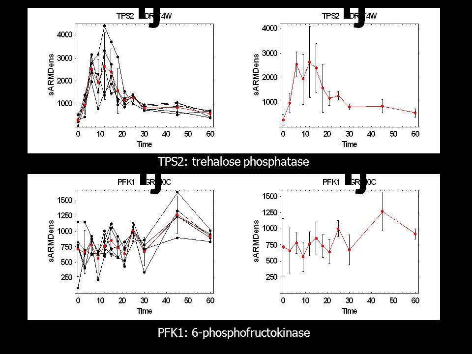TPS2: trehalose phosphatase