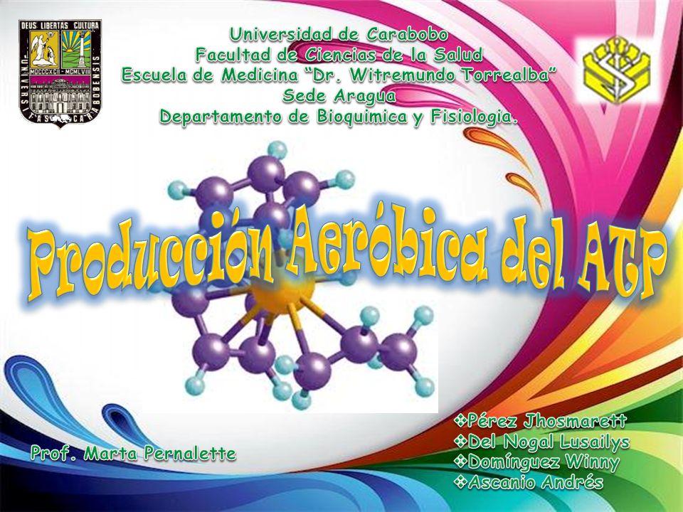 Producción Aeróbica del ATP