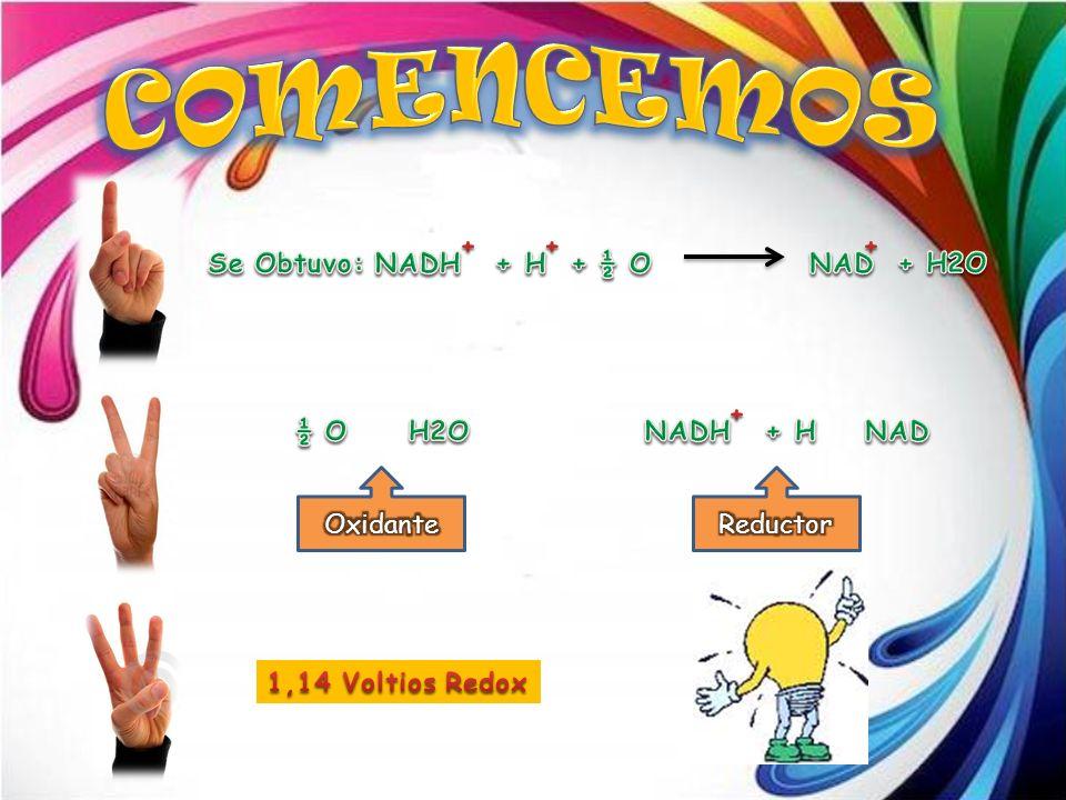 COMENCEMOS Se Obtuvo: NADH + H + ½ O NAD + H2O + ½ O H2O Oxidante