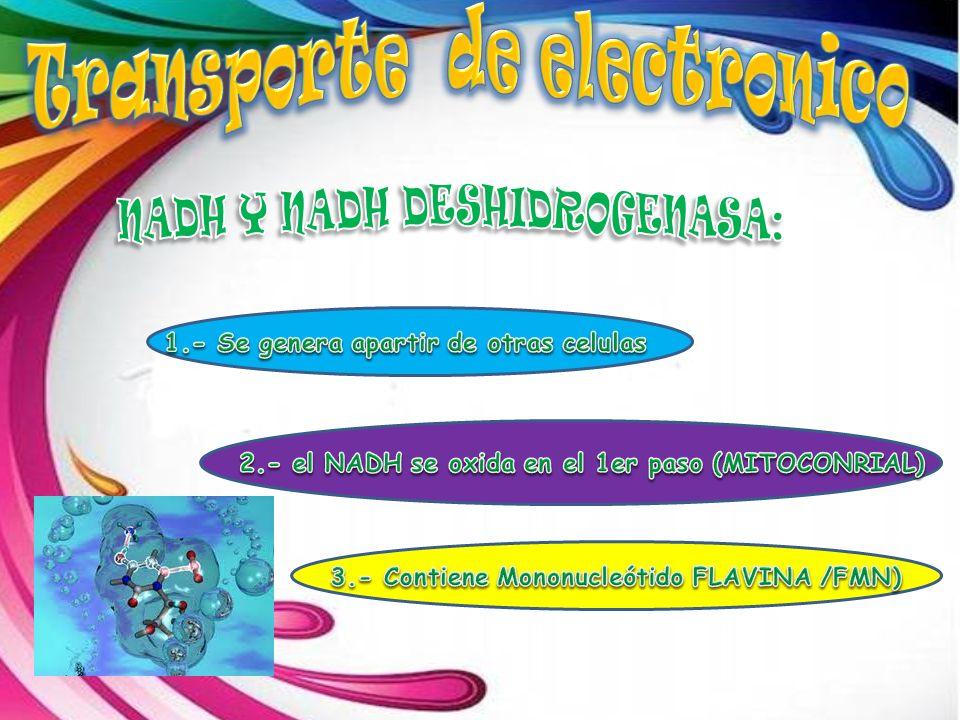 Transporte de electronico NADH Y NADH DESHIDROGENASA:
