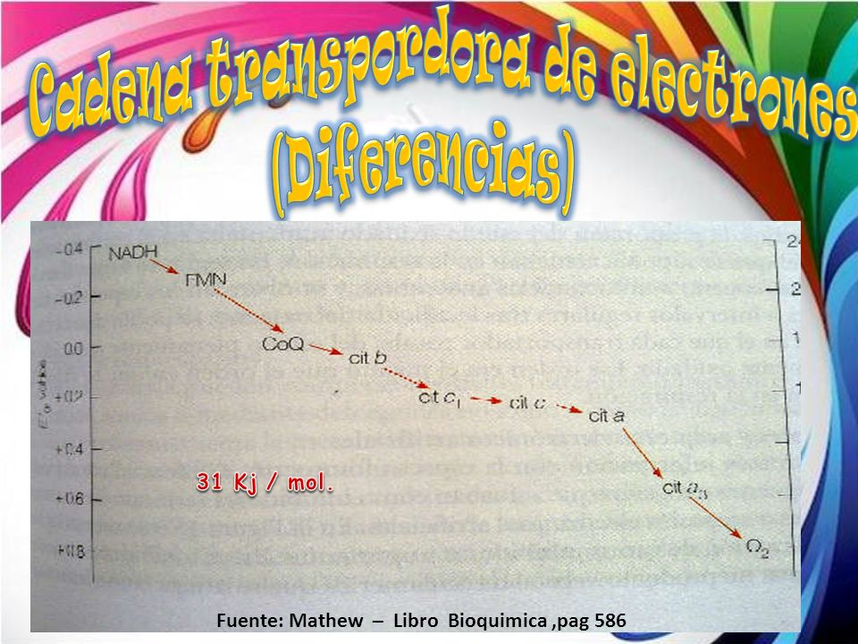Cadena transpordora de electrones
