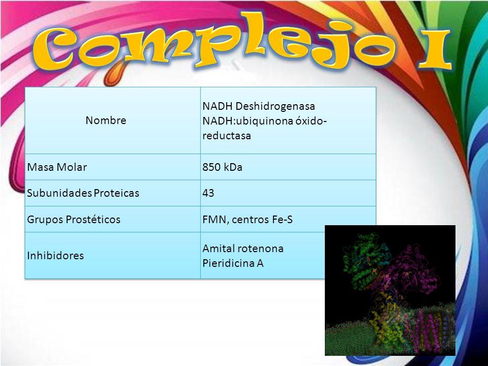 Complejo I Nombre NADH Deshidrogenasa NADH:ubiquinona óxido-reductasa