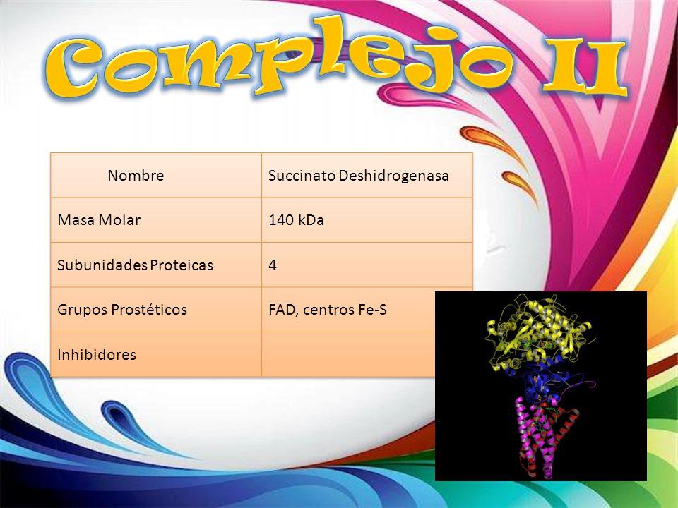 Complejo II Nombre Succinato Deshidrogenasa Masa Molar 140 kDa