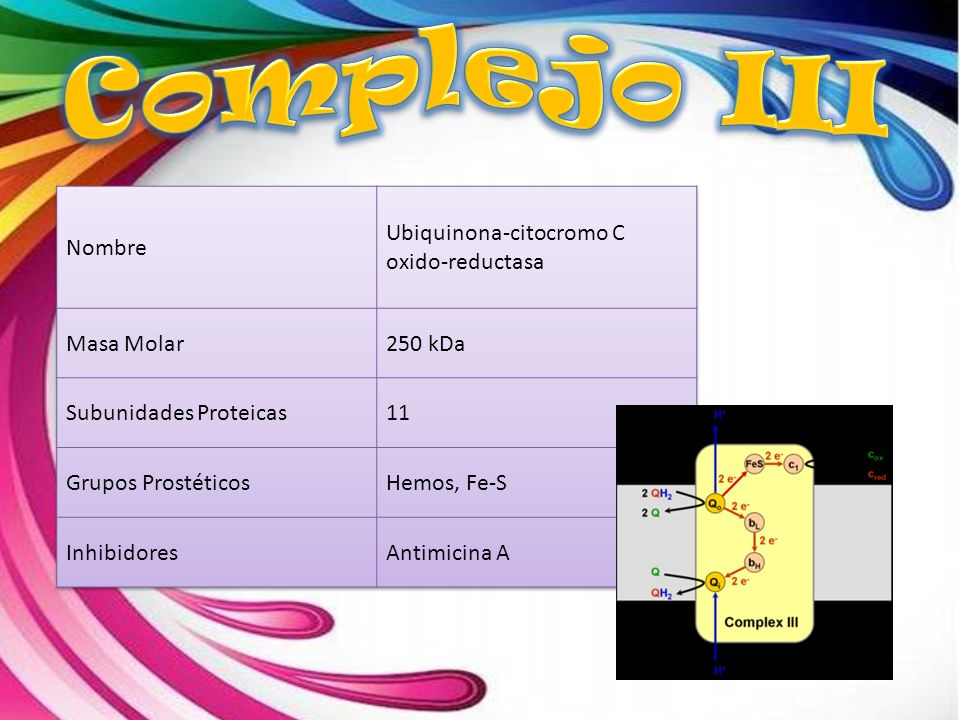 Complejo III Nombre Ubiquinona-citocromo C oxido-reductasa Masa Molar