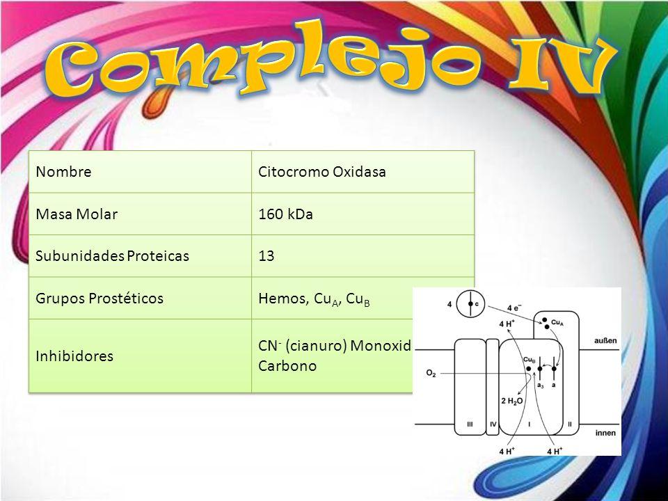 Complejo IV Nombre Citocromo Oxidasa Masa Molar 160 kDa