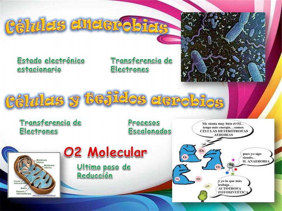 Células y tejidos aerobios