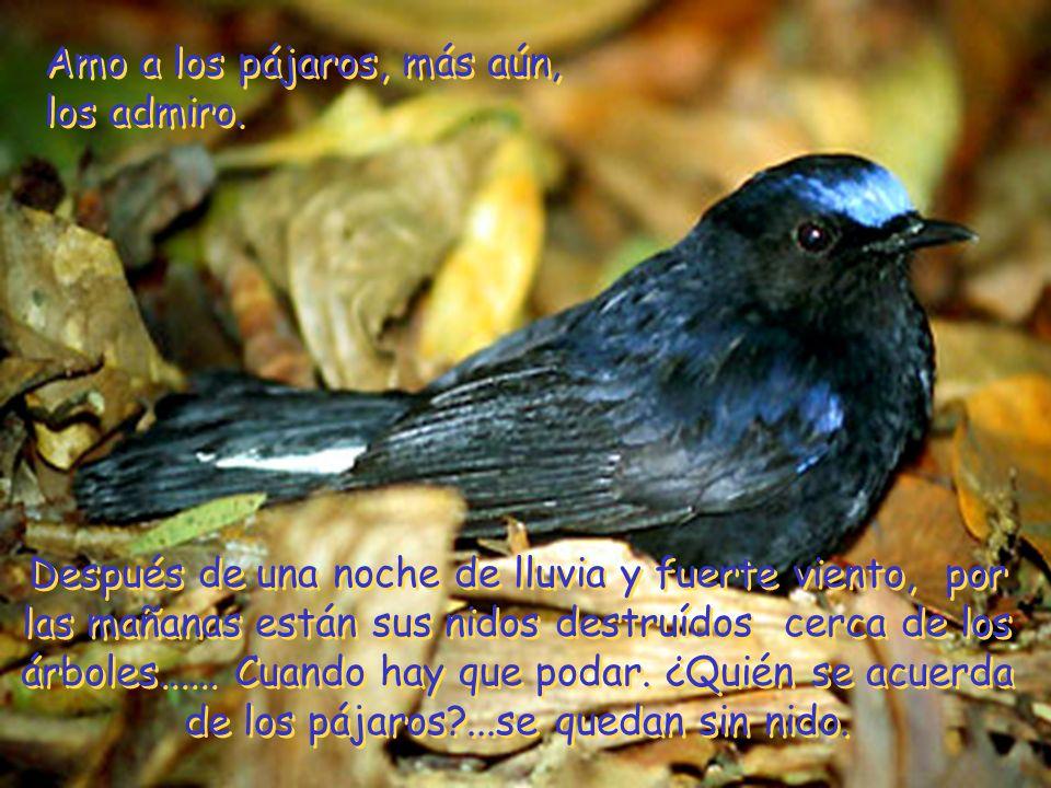 Amo a los pájaros, más aún, los admiro.