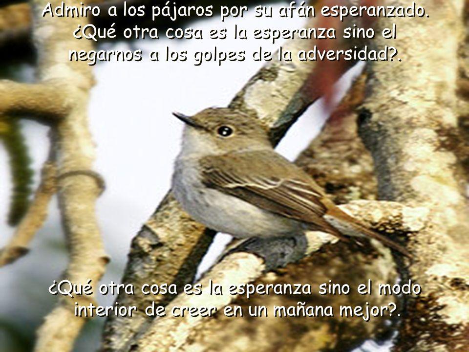 Admiro a los pájaros por su afán esperanzado.