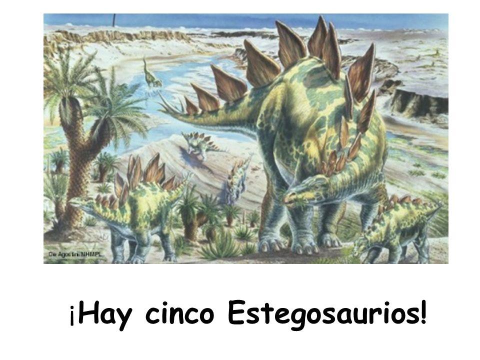 ¡Hay cinco Estegosaurios!