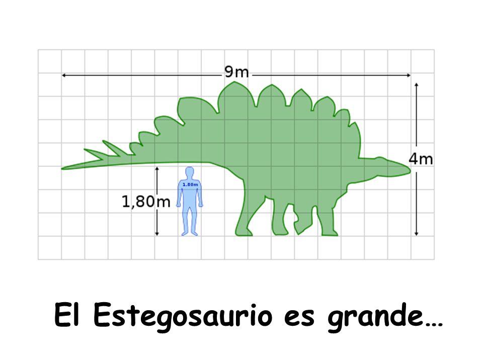 El Estegosaurio es grande…