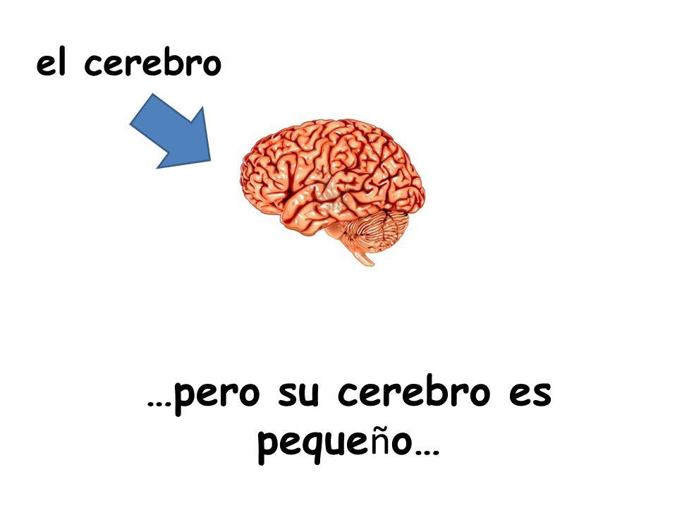…pero su cerebro es pequeño…