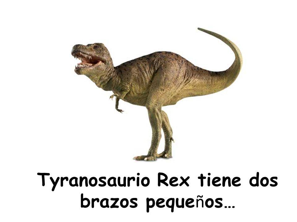 Tyranosaurio Rex tiene dos brazos pequeños…