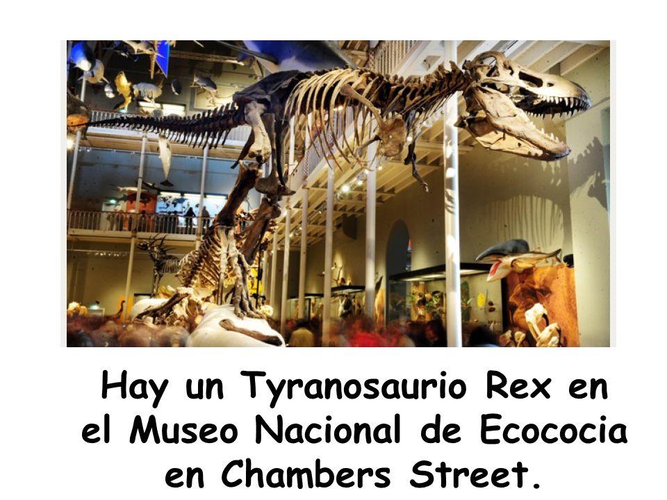 Hay un Tyranosaurio Rex en el Museo Nacional de Ecococia en Chambers Street.