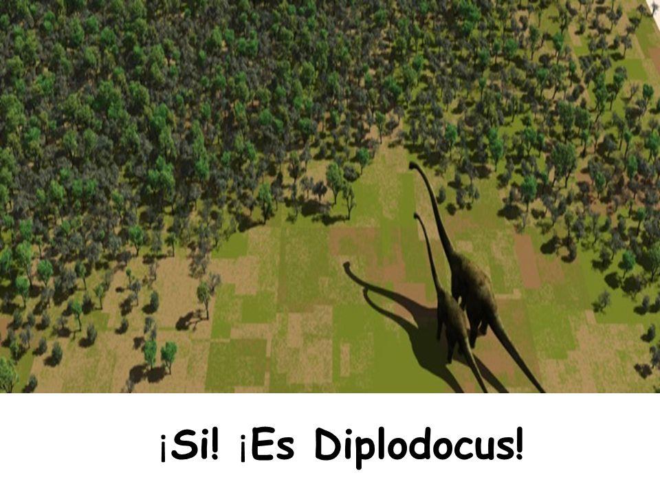 ¡Si! ¡Es Diplodocus!
